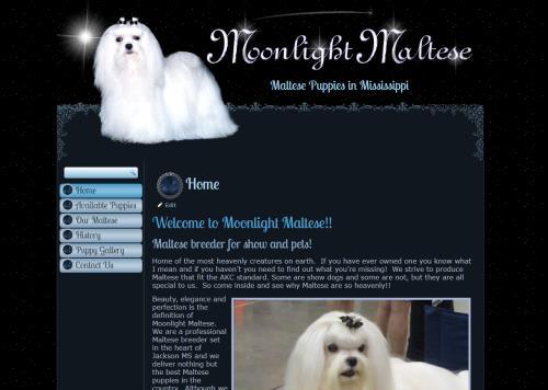 Moonlight Maltese